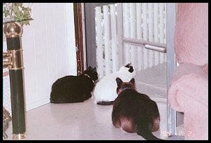 Three at the door