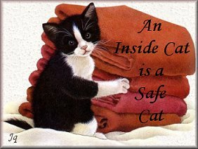 An inside cat is a safe cat.