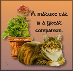 A mature cat makes a great companion.