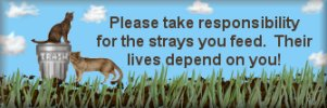 Be responsible for the strays you feed.