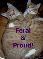 Feral and Proud