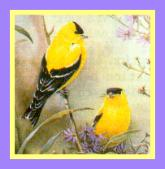 finches framed