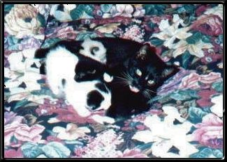 Delli and kittens on bed