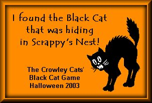 Play Catch the Black Cat at the Crowley Cats
