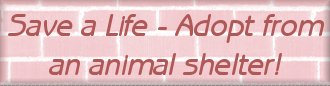 Adopt from an animal shelter