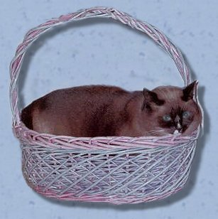 Izzy in basket