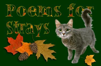 Poems for Strays