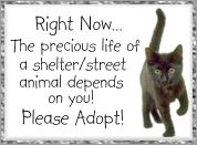 Adopt a Stray
